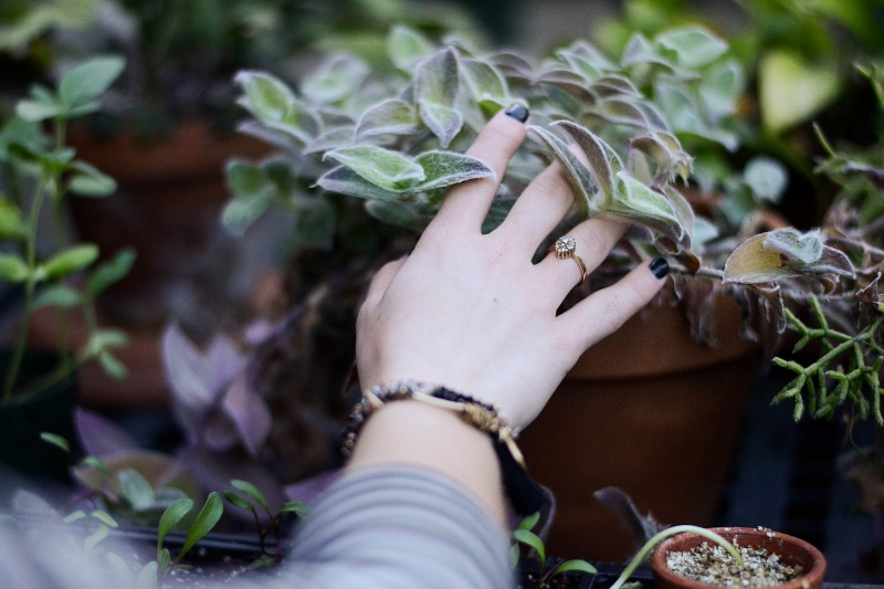 Using Plants To Decorate Your Patio Enclosure In Raleigh, NC